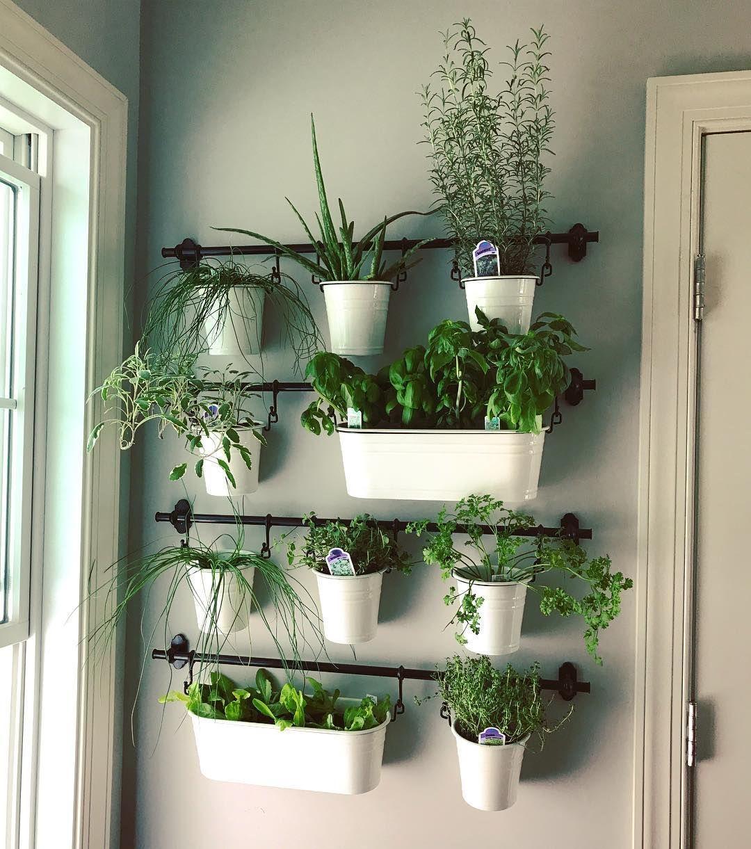 Indoor herb gardens on Instagram for the kitchen   Well+Good ...