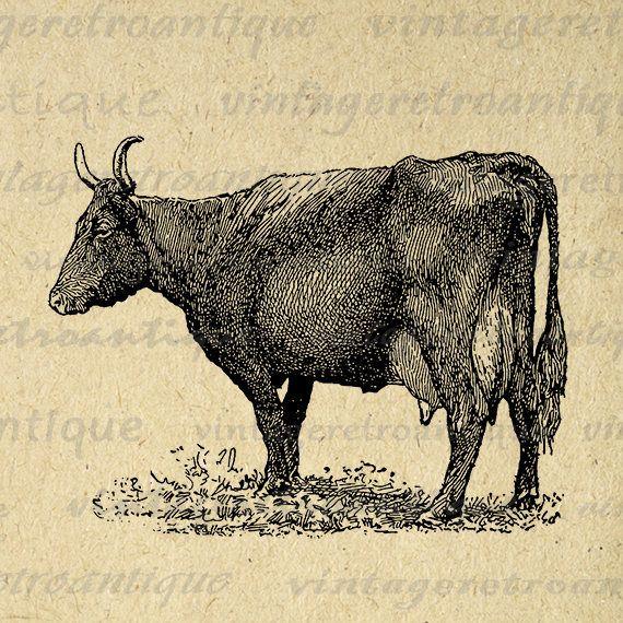 Printable Devon Cow Digital Graphic Farm Animal Image Download