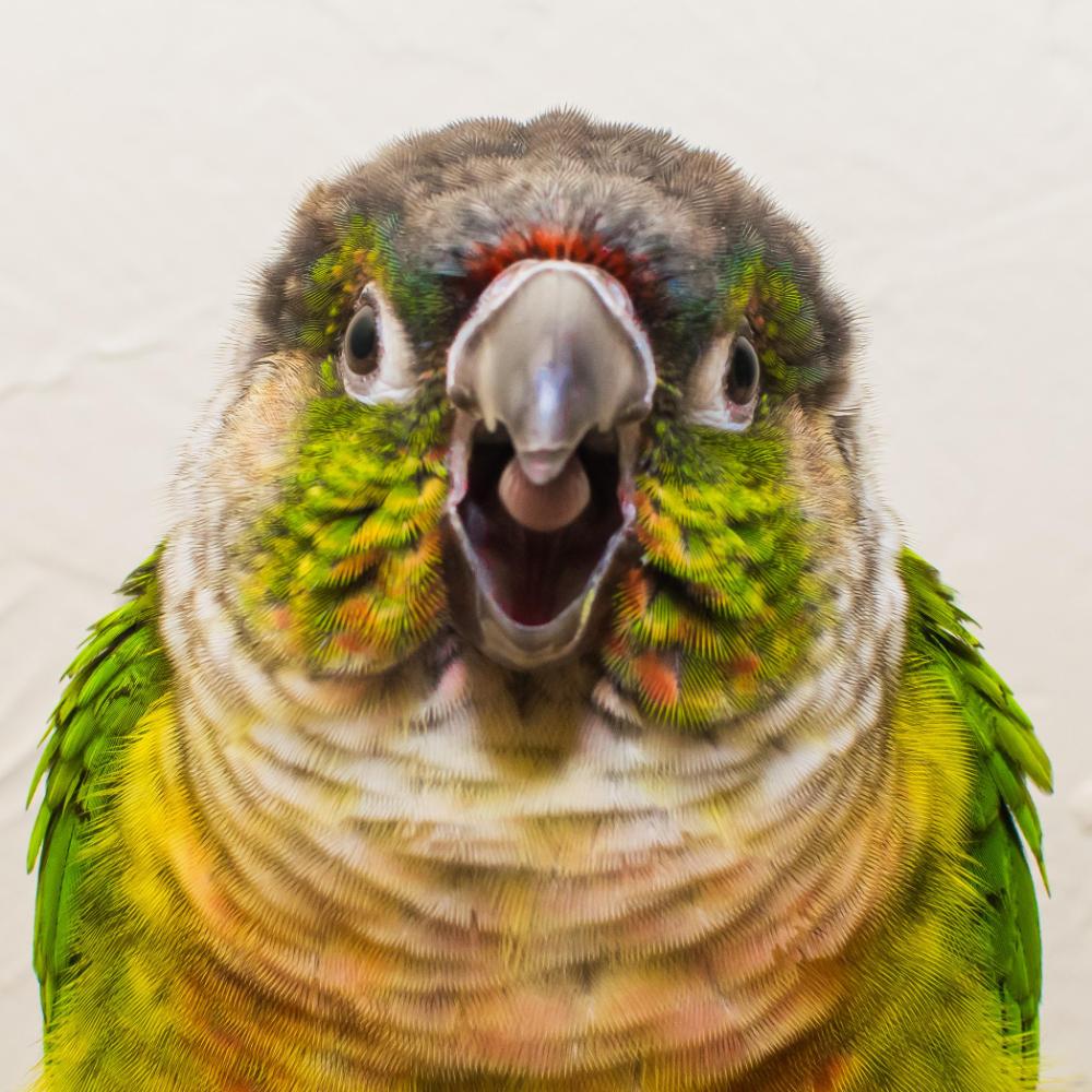 Pin By Pande Ariana On Layangan Animal Close Up Avian Veterinarian Beautiful Creatures