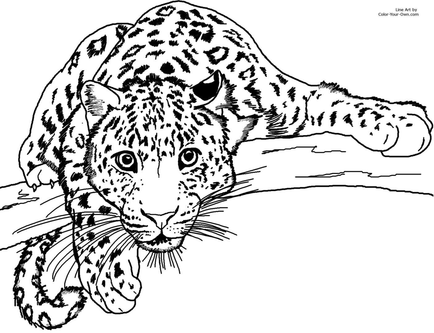 Leopard Coloring Sheet