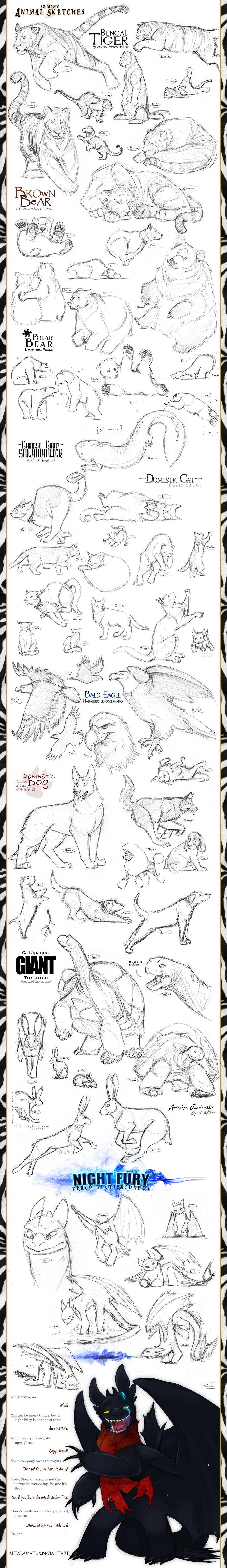 animal_sketches_by_altalamatox-d2y74n5.jpg 900×6,203픽셀