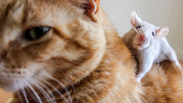 'The Animals We Love': A refreshing take on pet photography