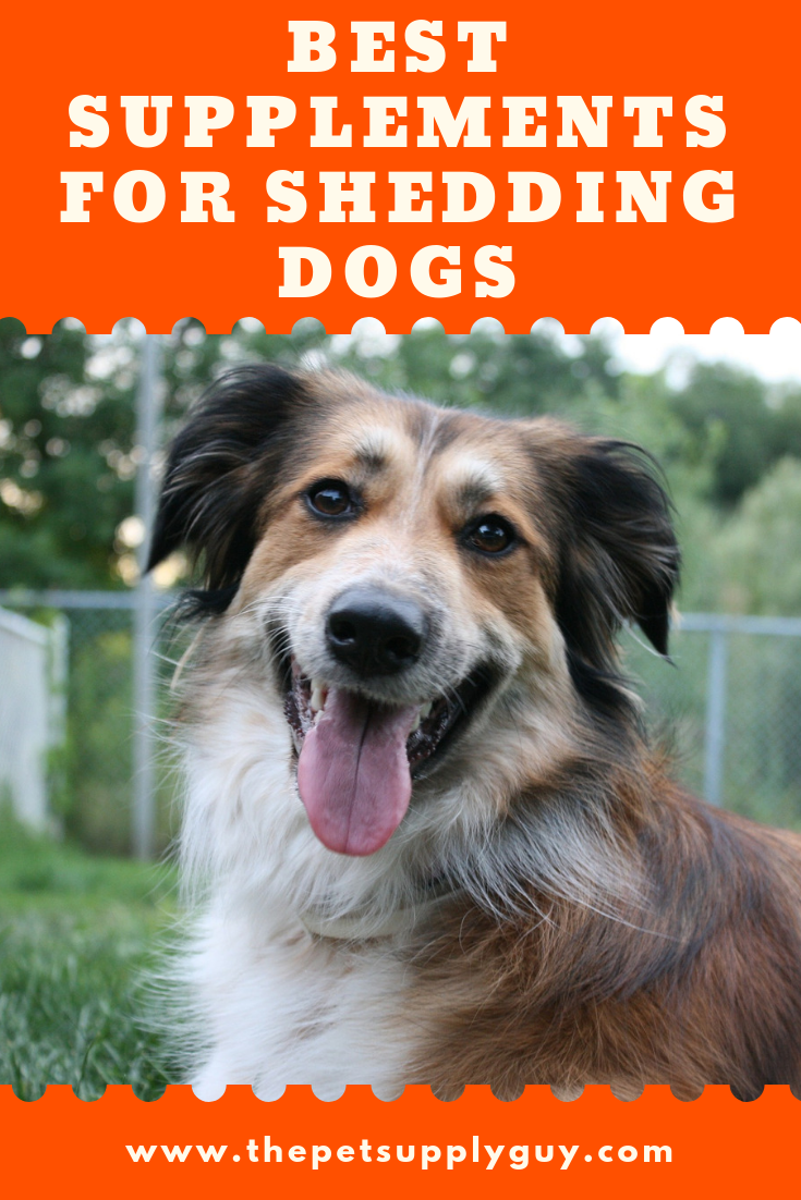 Best Supplements For Shedding Dogs 2020 Ratings Reviews Dog Shedding Dog Shedding Remedies Hair Supplements