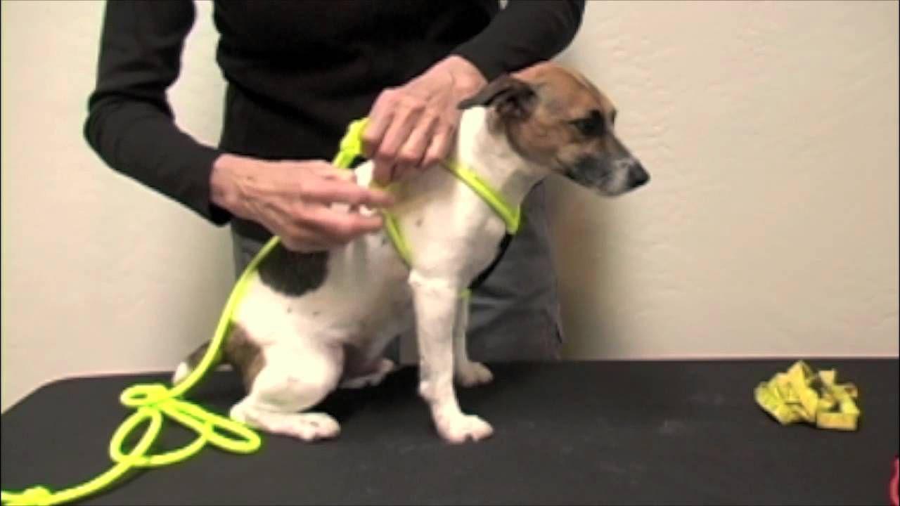 Rope N Go Proper Fitting Dog Harness Tutorial Dog Harness Diy