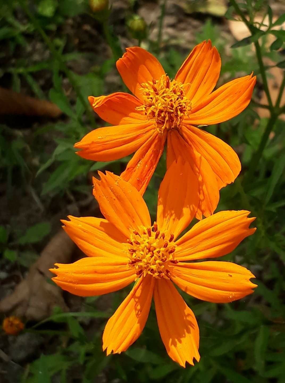 Pin By Lucia Esperanza On Flores Flowers Beautiful Flowers Orange Flowers