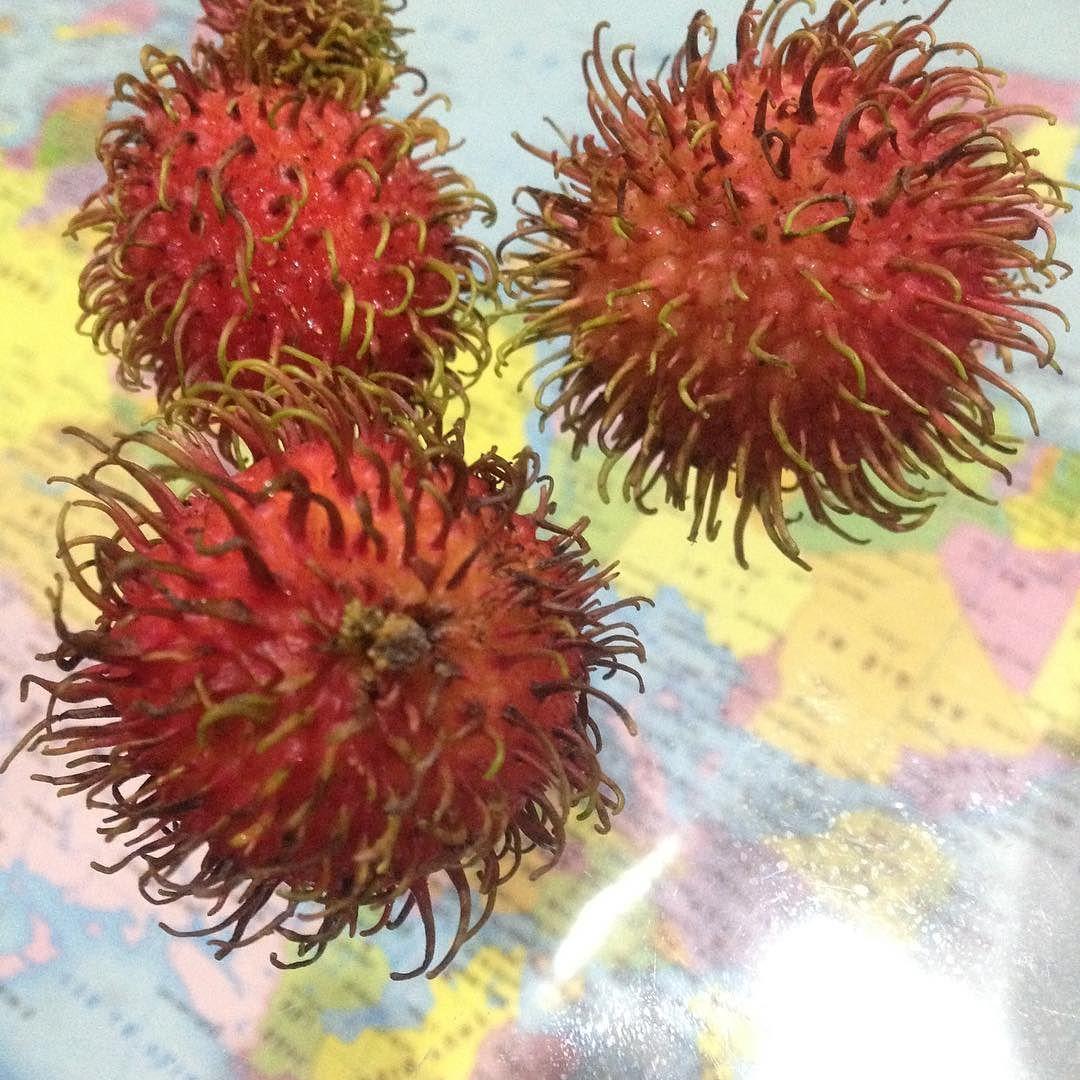 けむくじゃらのあなたを紹介しまっす 僕自身がはじめて知った南國の果物なのでこの子を紹介します 東南 ...