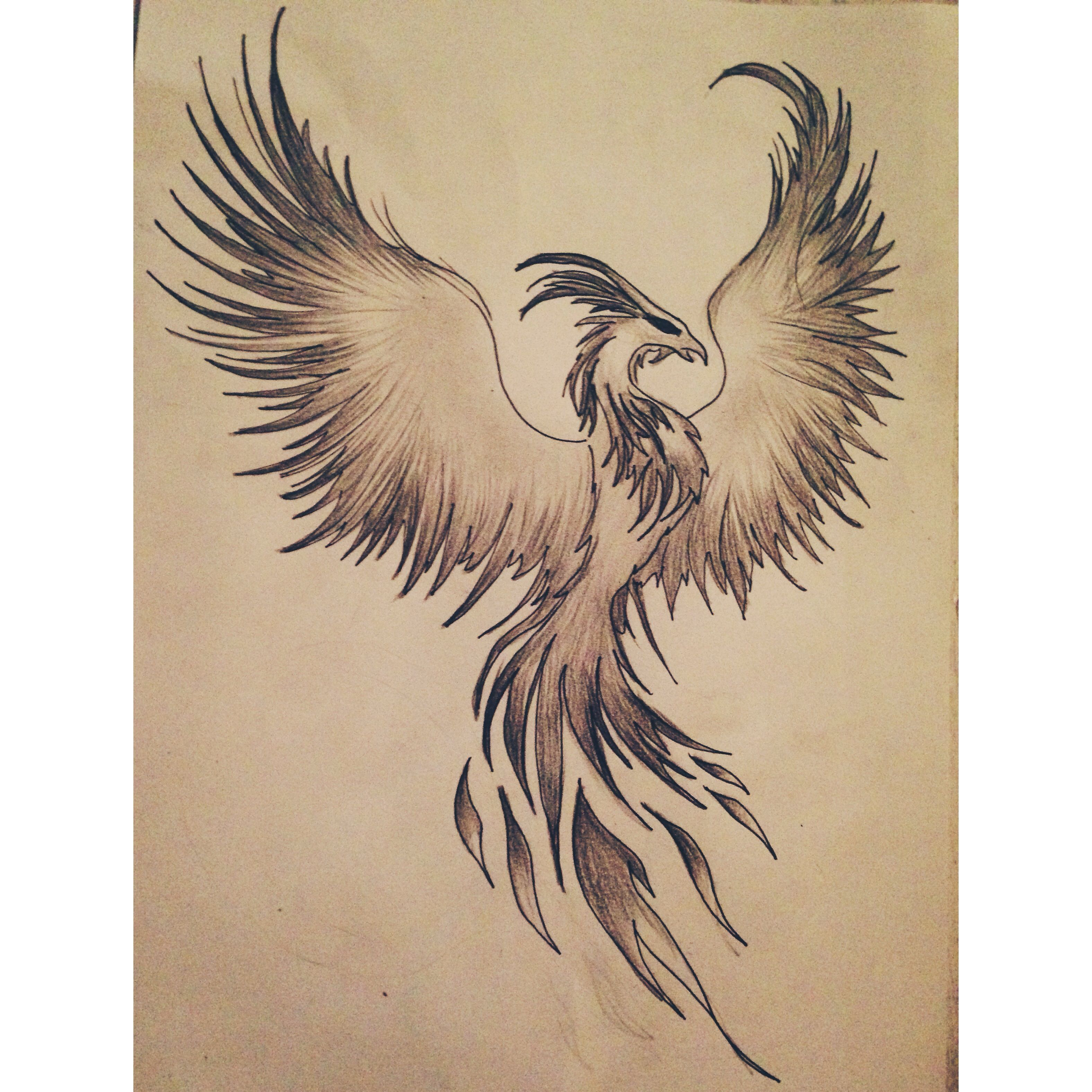 Phoenix Drawing | Tattoo Ideas | Pinterest | Phoenix Drawing Phoenix And Drawings