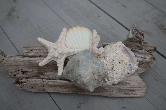 Driftwood Seashell Decor/Driftwood Shell by MyHoneypickles on Etsy