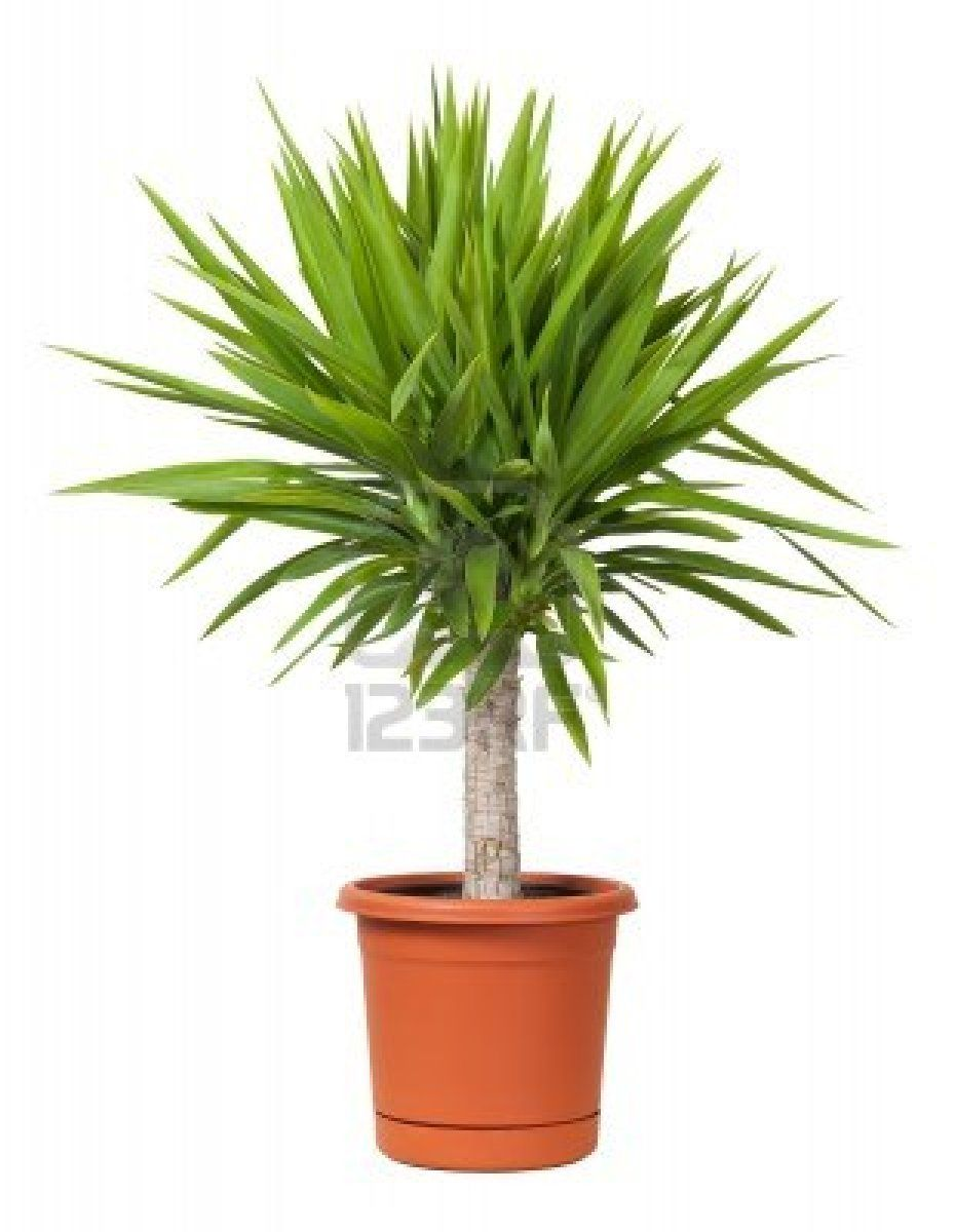 Artificial Areca Palm Tree Potted Plants Artificial Chrysalidocarpus Lutescens Bonsai Synthetic Indoor Coconut Tree Buy Artificial Chrysalidocarpus Yucca Potted Plant Isolated On A White Background Plants