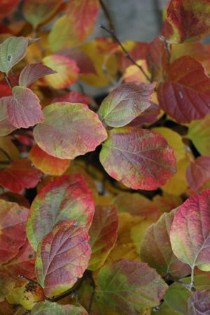 Shrubs Made for the Shade - Structure in Your Shady Landscape