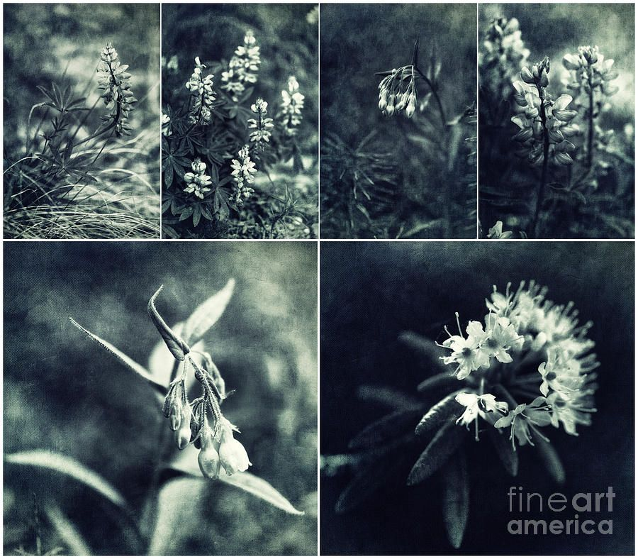 Yukon Wild Flower Collage Photograph by Priska Wettstein