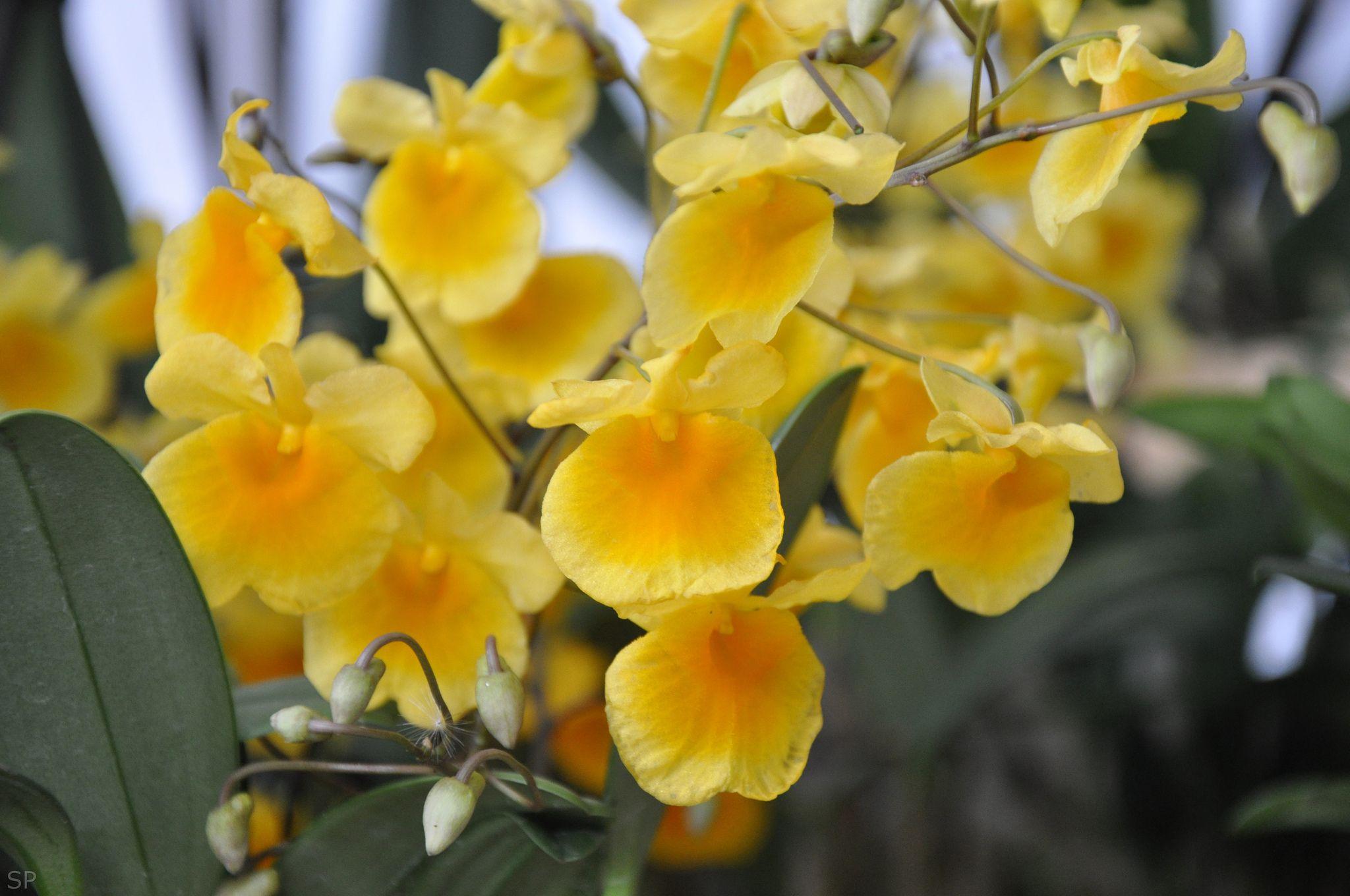 Este in fiore 2012 - Floricoltura Corazza