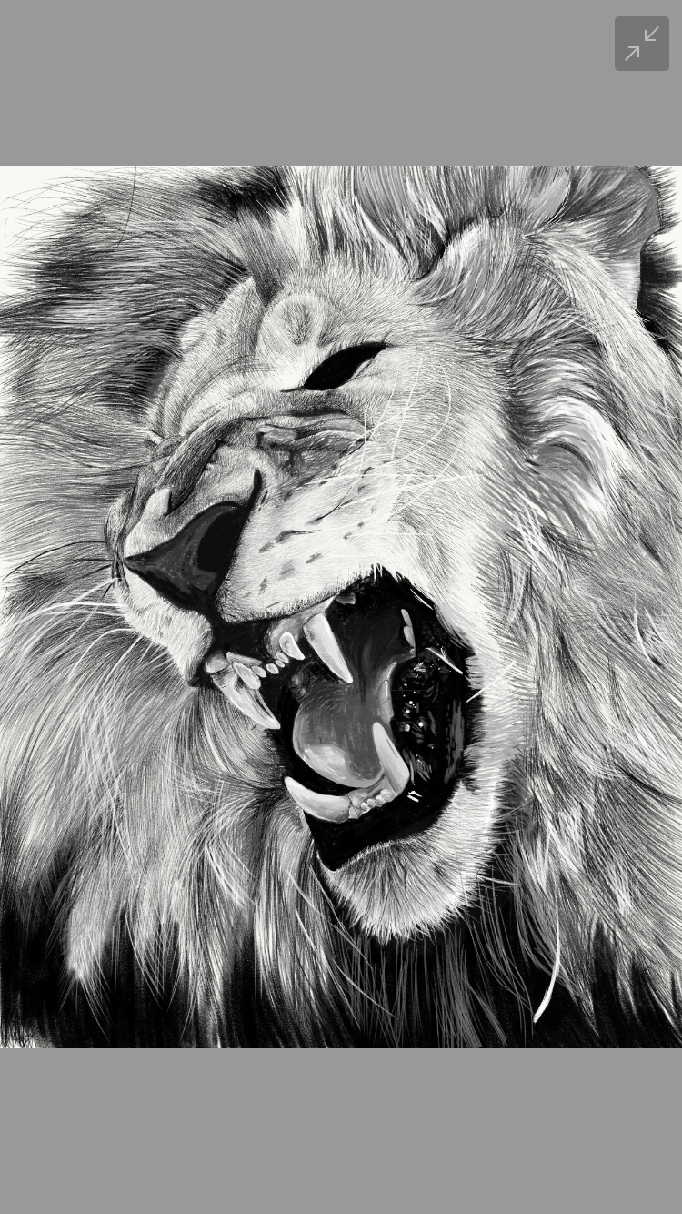 Lion Pencil Drawing Lion Face Pencil Drawings Drawings