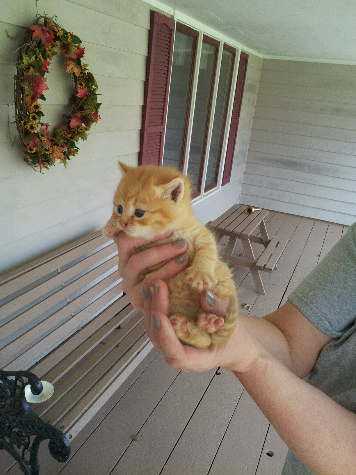 My mom found this little guy crying under our porch...the