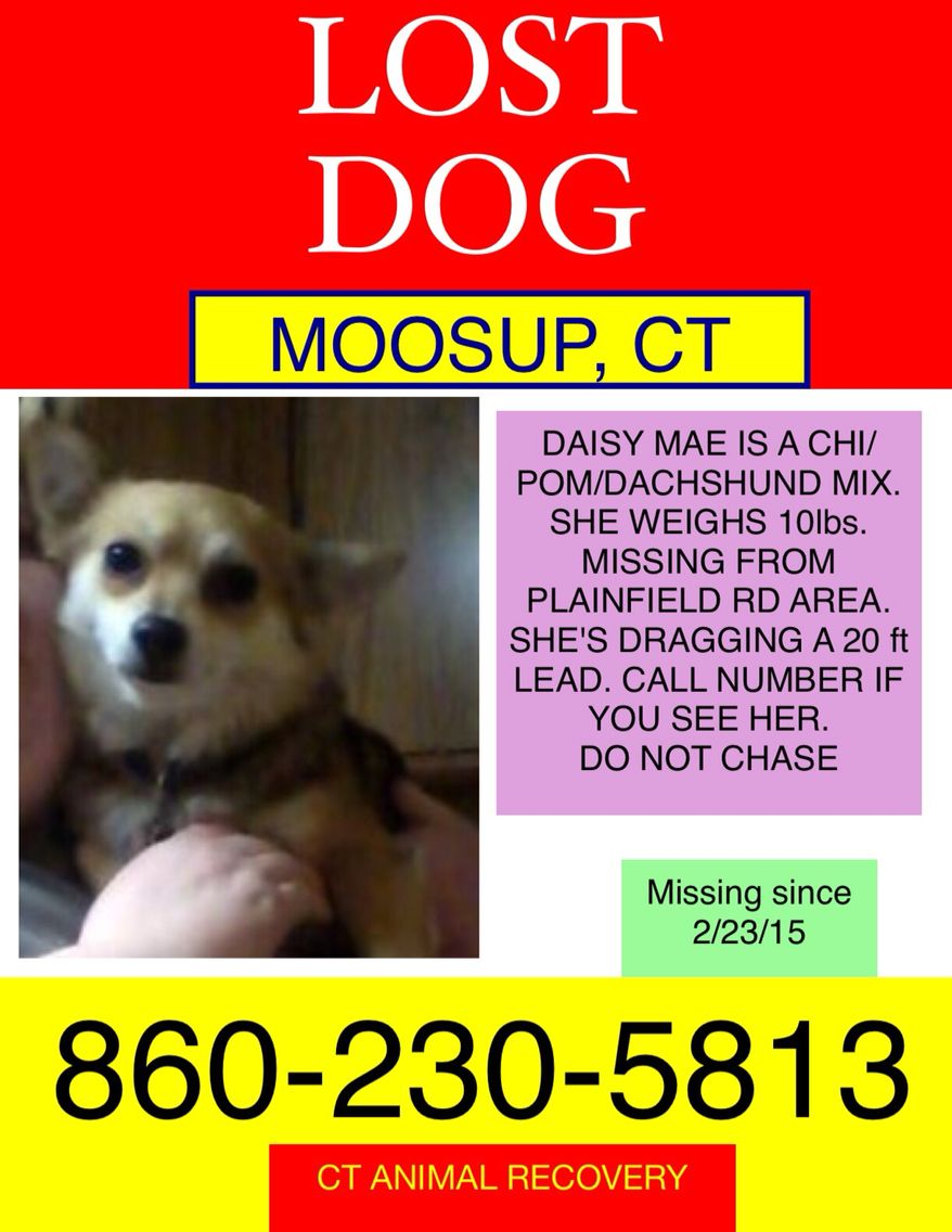 Lost dog in Moosup, Ct Losing a dog, Dachshund mix, Find