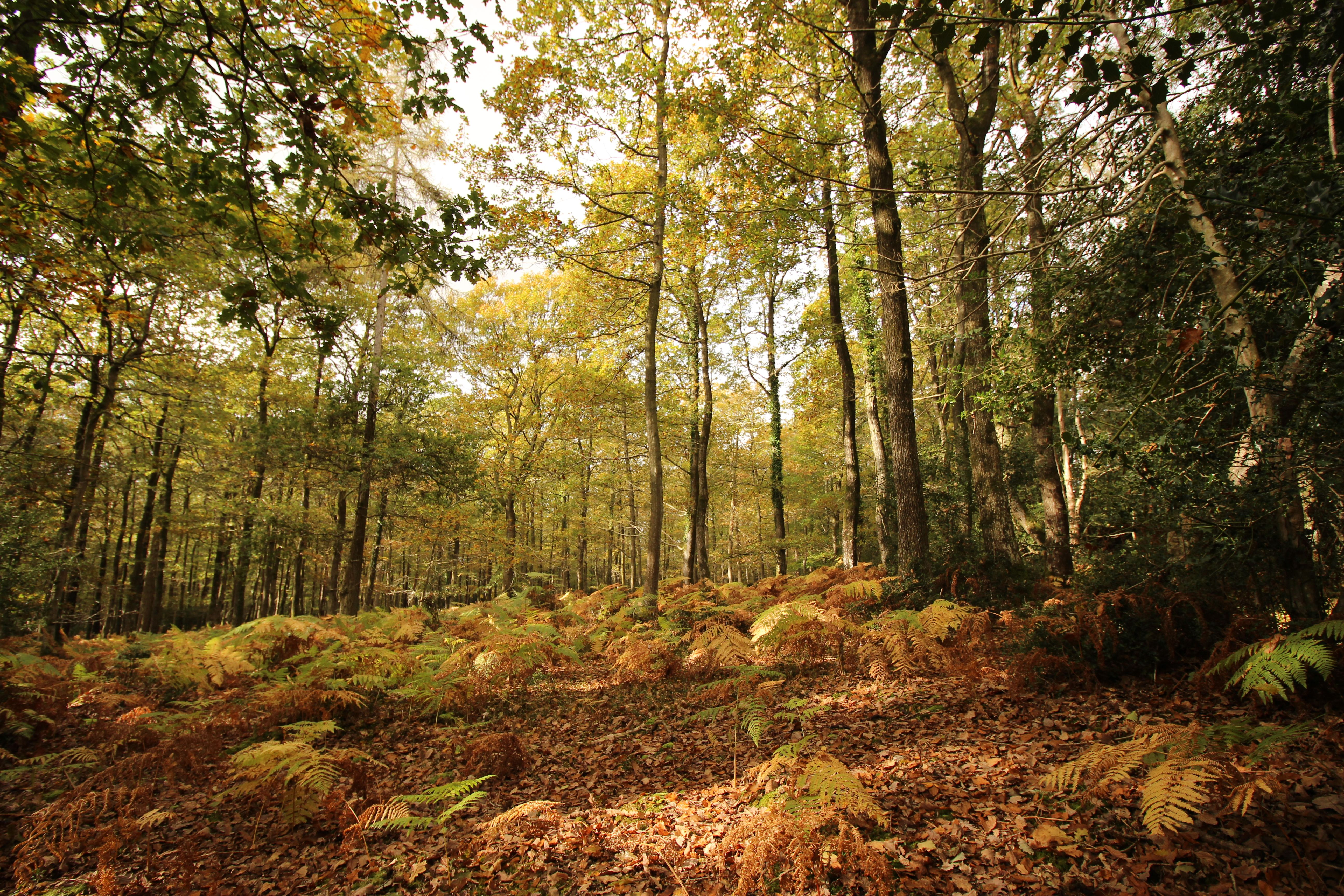 Autumn Colours In The New Forest National Park New Forest Forest Photography Landscape Photos