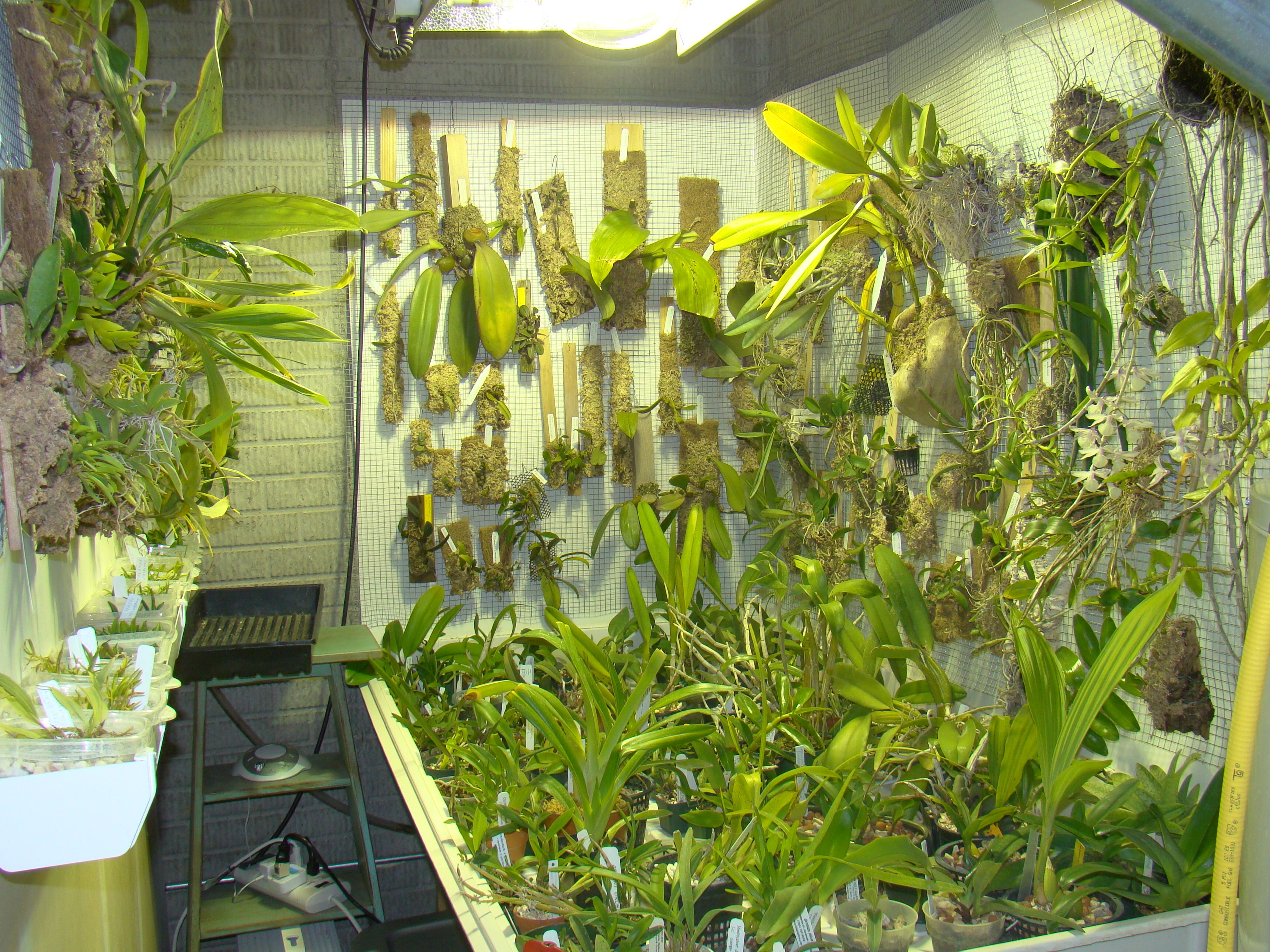 Orchid collection indoors under hid hp sodium grow light for Indoor gardening lights
