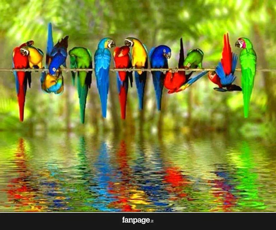 Un mondo di colori