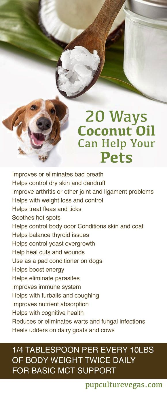 Dog health care coconut oil