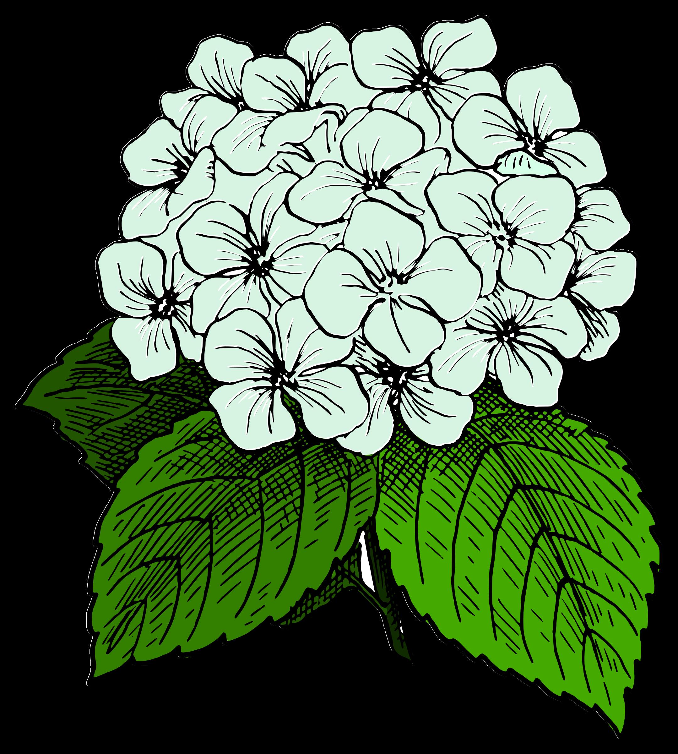 image result for black and white clip art hydrangea paper art rh pinterest com hydrangea clipart black and white clipart hydrangea images