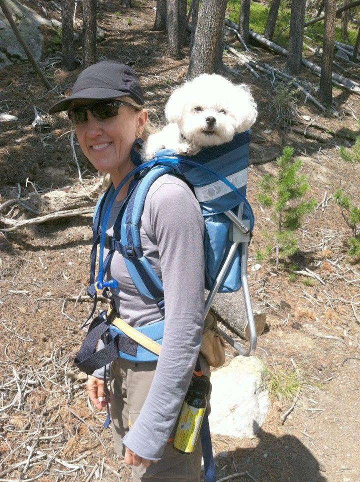 Small Dog In Hiking Backpack