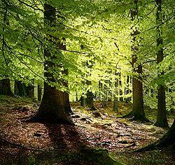 Bosque - Wikipedia, la enciclopedia libre