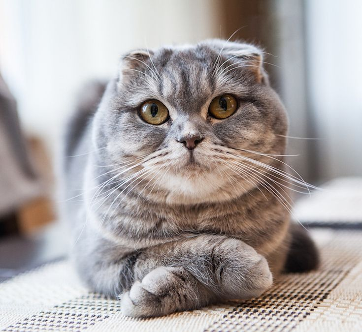 We Know What Funny Cat GIF You Need To See Today