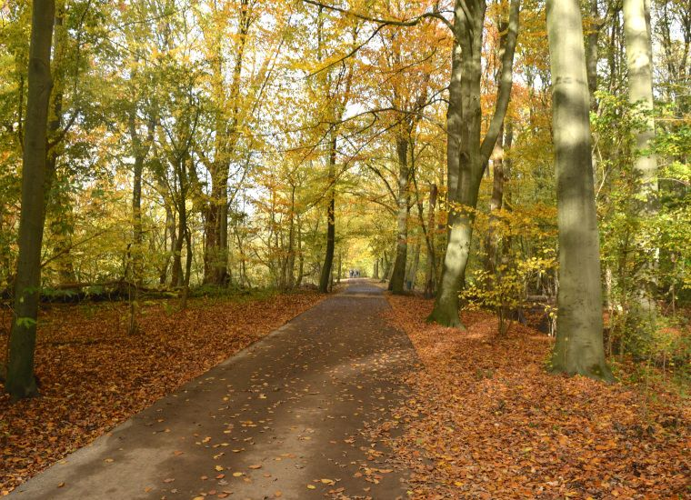 The Four Seasons Of The Kralingse Bos Netherlands
