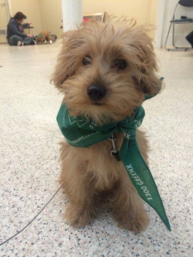 This Adorable Puppy Was Stolen And Made A Surprise Return Ten Days