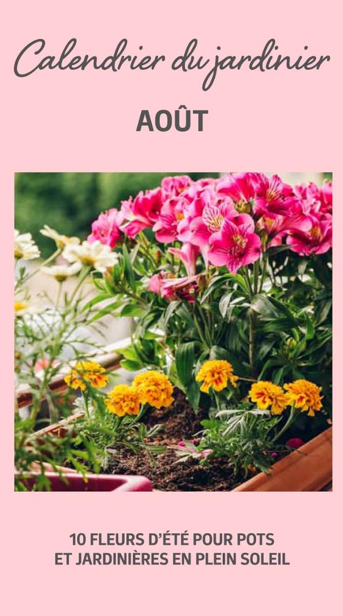 33++ Fleurs plein soleil en jardiniere ideas in 2021