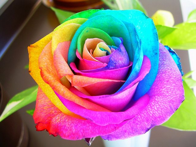 For A Rose Every Color Has Meaning Imagine What It Would Mean To Give Or Receive This Ros Rainbow Roses Beautiful Rose Flowers Beautiful Flowers Wallpapers