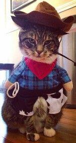 Cowboy c: