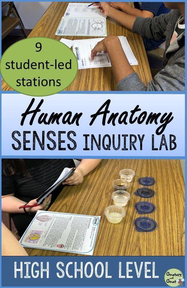 Five Senses Lesson Inquiry Lab Activity - Senses Stations for High School in 2020 | High school science activities. High school activities. High ...