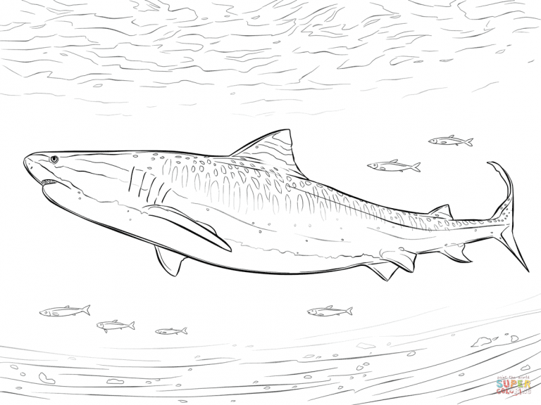 Free Printable Coloring Pages In Free Download Printable Crocodile Shark Coloring Pages Shark Coloring Pages Tiger Shark Coloring Pages