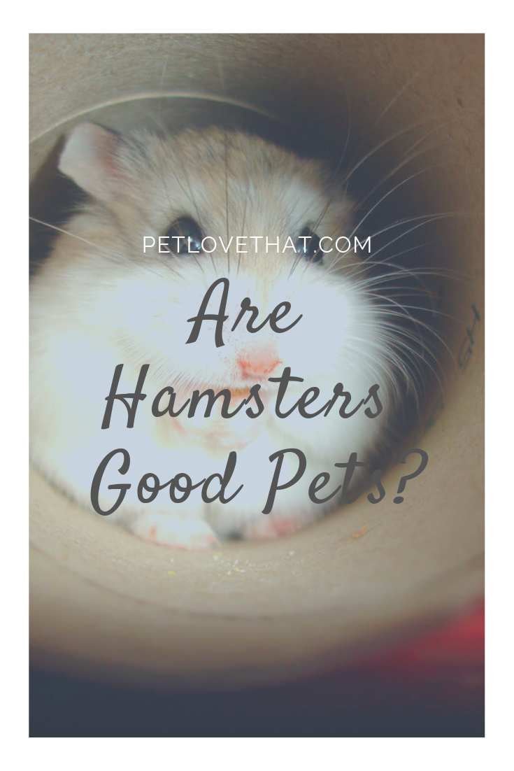 Are Hamsters Good Pets
