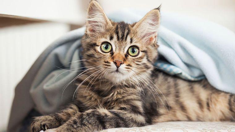 """Résultat de recherche d'images pour """"chat heureux croquette"""""""