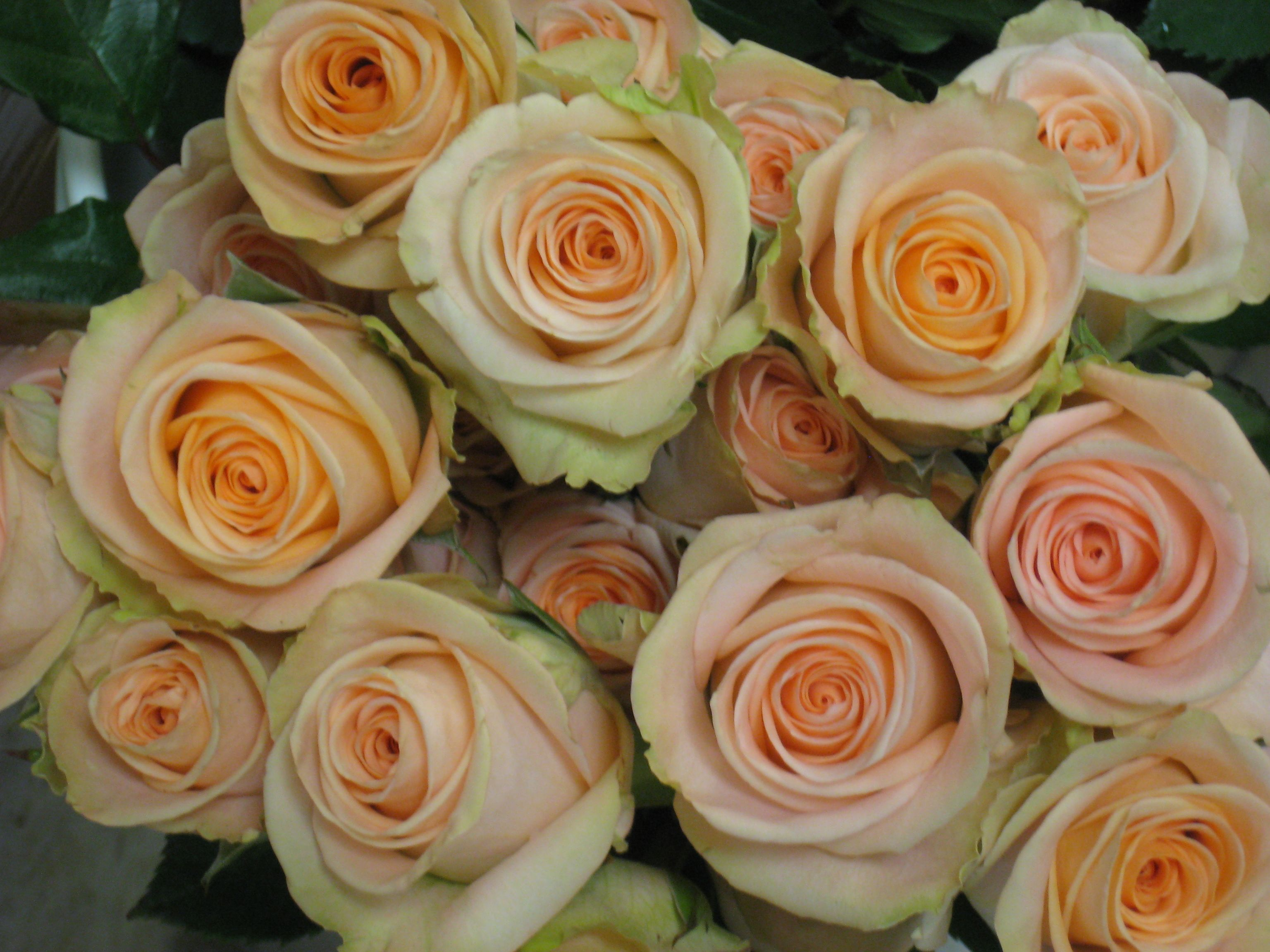 Flowers by shirley garden rose bouquets -  Tiffany Rose Love The Variety Of Shades Within The Roses