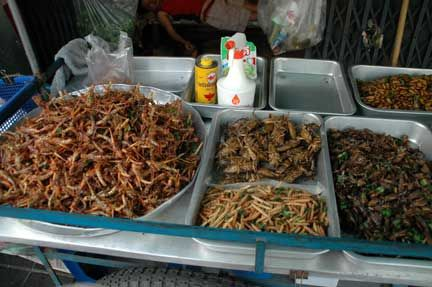 eat these disgusting edible insects :))