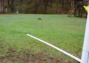 A Pvc Sump Pump Discharge Line Pipe Laying In A Yard