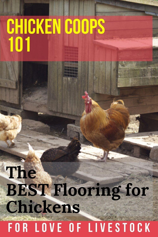 8 Chicken Coop Floor Options The Best Flooring Materials For Your Coop Chicken Coop Bedding Easy Diy Chicken Coop Chicken Coop