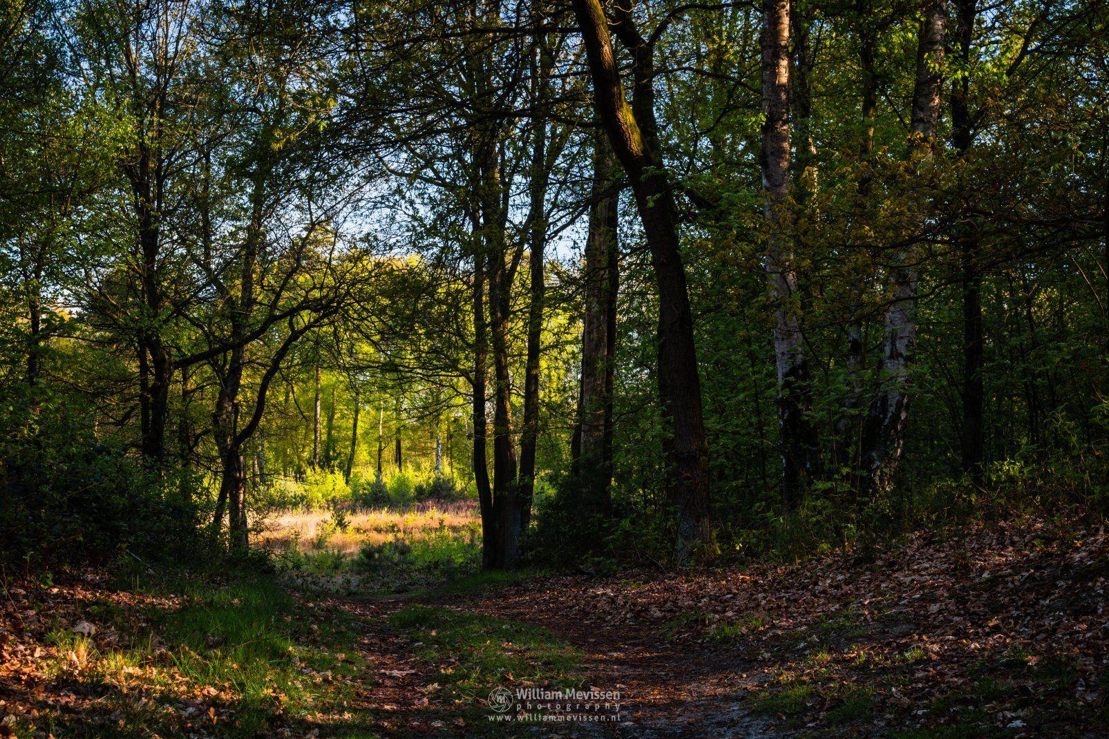 Photo Forest Path Into The Light in nature reserve Ravenvennen by William Mevissen. Landscape and Nature Photography at www.williammevissen.nl.