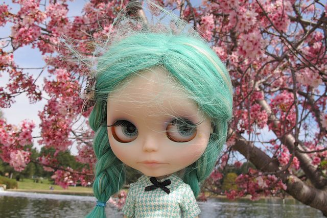 Poe and the cherry blossoms   Flickr - Photo Sharing!