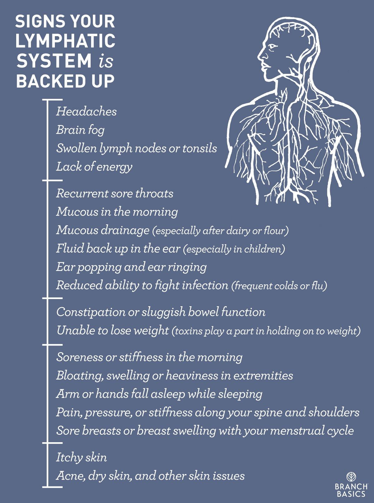 Lymph part of the circulatory system - Branch Basics Signs Your Lymphatic System Is Backed Up