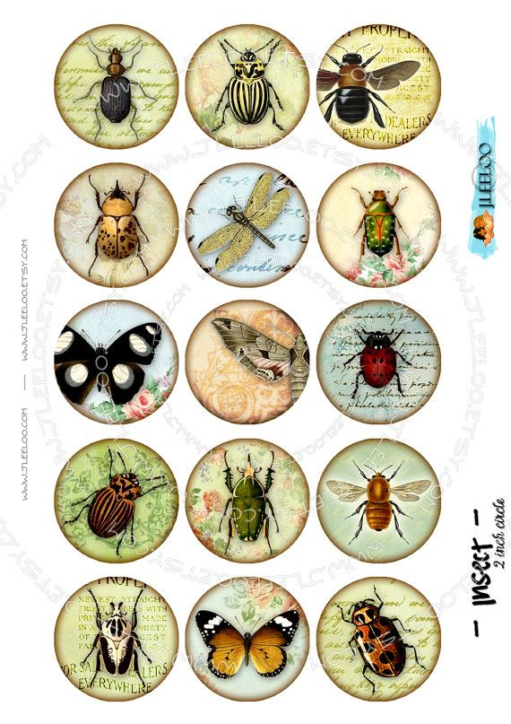 Instant Download Digital sheet rounds INSECT printable by JLeeloo