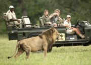 Amazing Big 5 Safari, winelands, hiking, beautiful beaches and much more to see in South Africa! What are you waiting for?