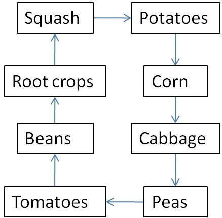 Crop Rotation Crop Rotation Food Garden Edible Garden