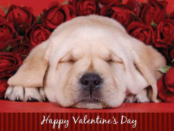 valentine u0026 39 s day screensavers with dogs