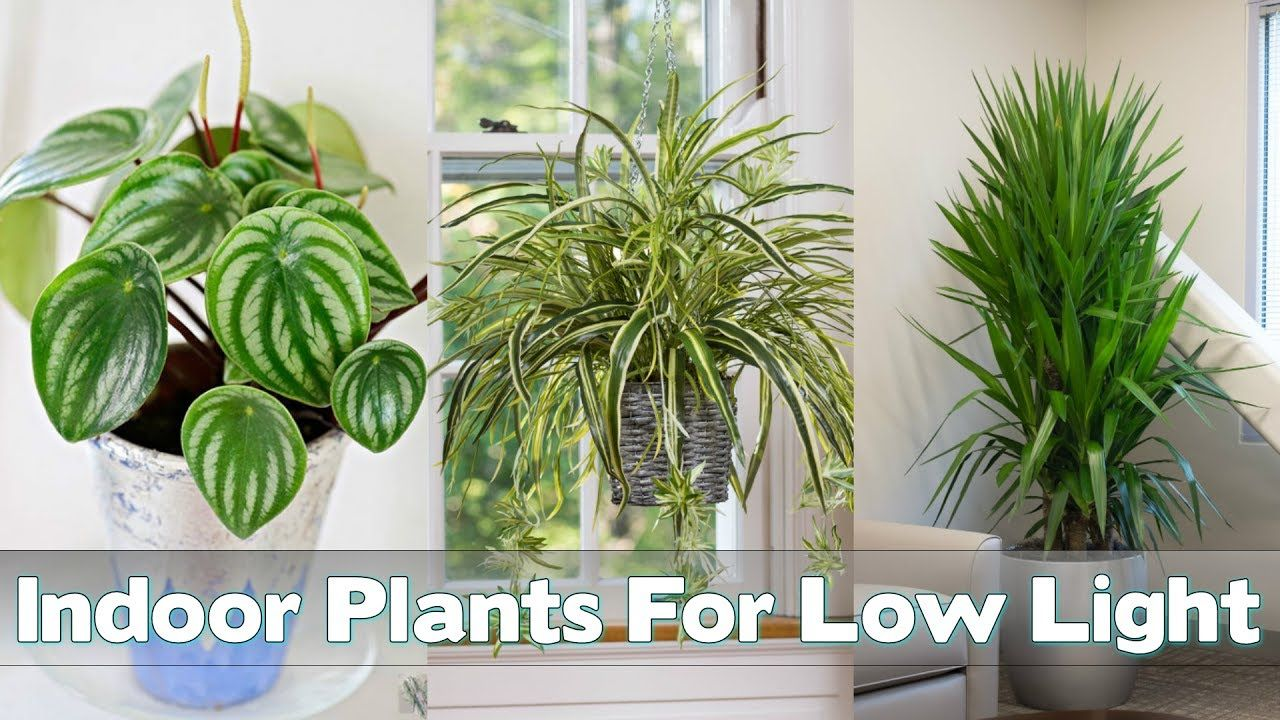 Indoor Plants For Low Light 25 Indoor Plants For Low Light Gardening Indoors