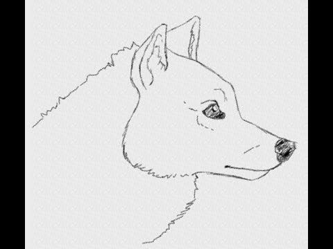Line Drawing Of Sheep Face : Check out this easy tutorial on how to draw a wolf s face in side