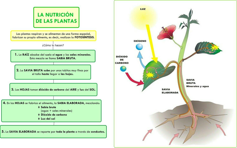 A Nutricion Das Plantas Hojas De Trabajo De La Escuela Fotosintesis Ciencias De La Naturaleza